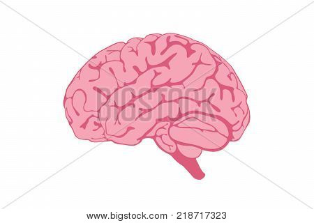 Human Brain illustration isolated on white background