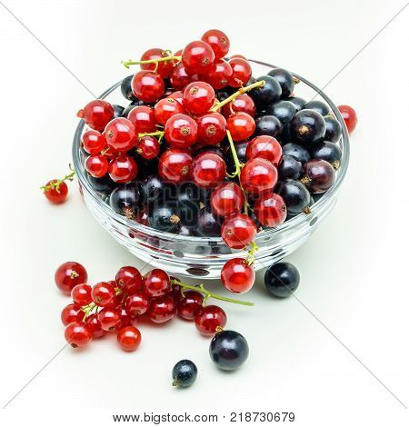Black currant and brushes of red currant in glass vase. Vase with red and black currant isolated on white background