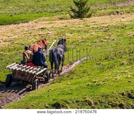 Pylypets Ukraine - May 01 2017: traffic in mountainous rural area in summer. wooden cart with two horses and two men ridge uphill the grassy