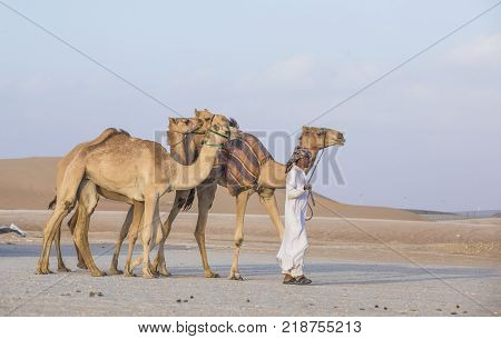 Bedhouin With A Camel In A Desert