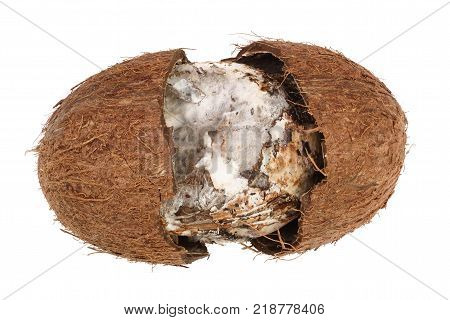 Coconut spoiled with mold isolated on white background. Top view.