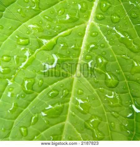 Drops Of Water On Leaf, Extreme Close-Up