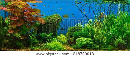 Tropical fresh water aquarium. Live plants and fish