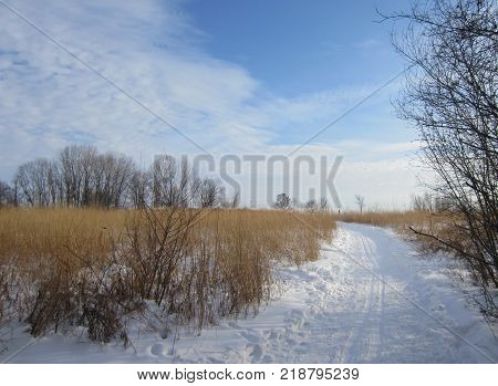 A snow covered winter trail shows tracks where cross country skiers have enjoyed the beauty and fresh air of the midwest open countryside with grasses, trees, and blue sky.