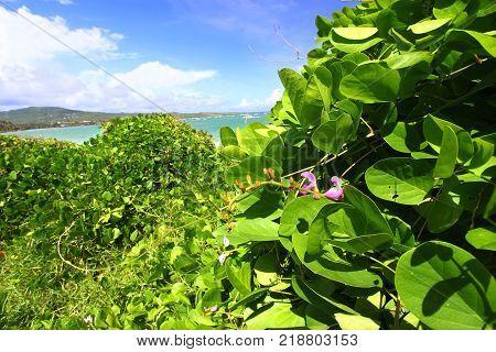 Tropical vegetation grows along the coast at Anse de Sables Beach in Saint Lucia