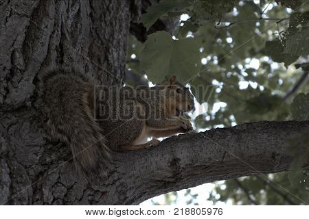 While venturing on a trip, i noticed a squirrel rummaging his way through the left