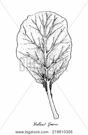 Vegetable Salad, Illustration of Hand Drawn Sketch Delicious Fresh Collard Greens Isolated on White Background.