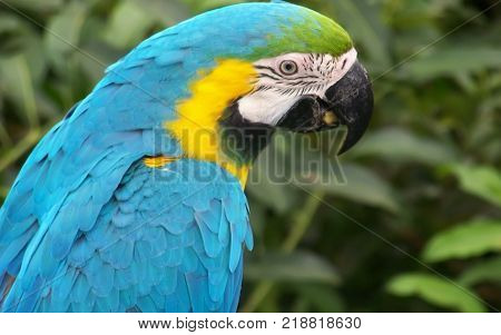 blue, yellow and black color macaw bird