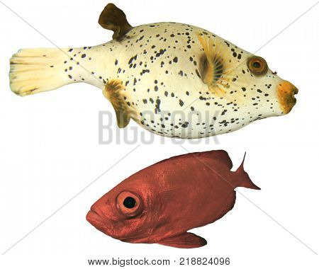 Blackspotted Pufferfish and Crescent-tailed Bigeye fish. Reef fish isolated on white background