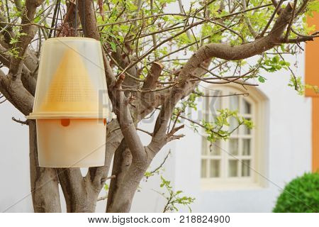 Insect trap hanging on tree outdoors