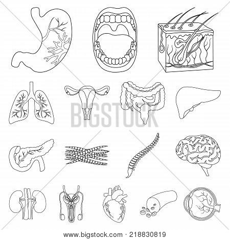 Internal organs of a human outline icons in set collection for design. Anatomy and medicine vector symbol stock  illustration.