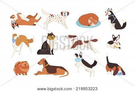 Collection of funny dogs of various breeds playing, sleeping, lying, sitting. Set of cute and amusing cartoon pet animals isolated on white background. Colorful vector illustration in flat style