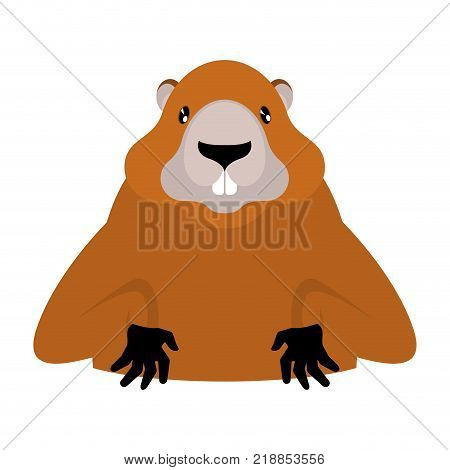 Groundhog Marmot portrait isolated. Wild Rodent head. Illustration for Groundhog Day holiday