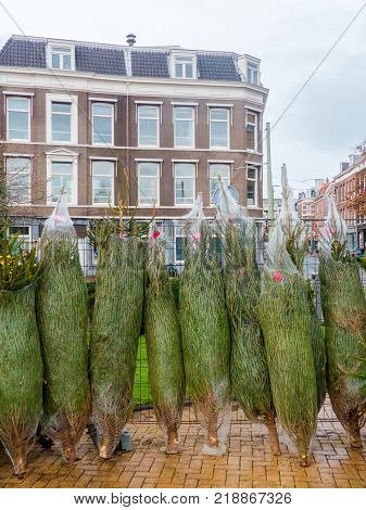 The Hague the Netherlands - 17 December 2017: christmas trees for sale in the Zeehelden kwartier in The Hague