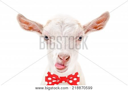 Portrait of funny goat in a bow tie, isolated on white background