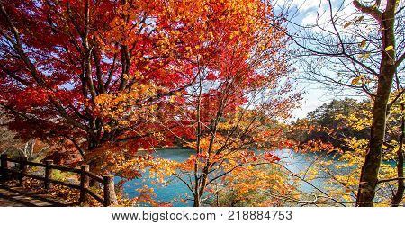 Landscape of colorful leaves of trees at the turquoise colored lakeside in autumn.