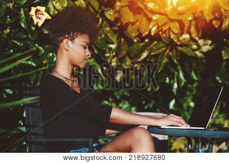 Serious African American freelancer girl is sitting at the table in front of wall of plants and working on laptop; Brazilian curly female with netbook freelancing while sitting in street cafe alone
