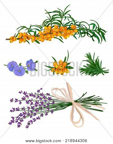 scented grass with sea buckthorn on a white background
