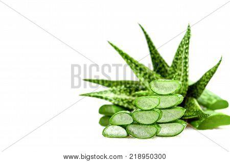 Slice Aloe Vera (Aloe barbadensis Mill.Star cactus Aloe Aloin Jafferabad or Barbados) a very useful herbal medicine for skin care and hair care.