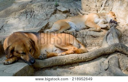 Two homeless dogs sleeps on stones in nature.