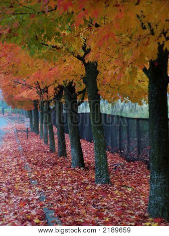 Fall Trees In A Row