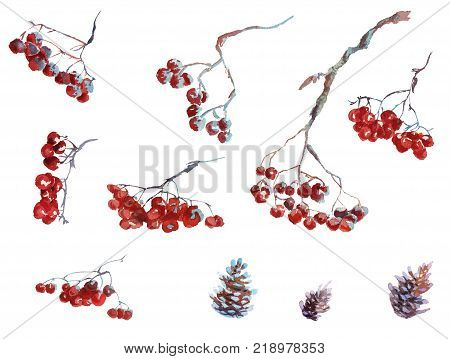 Collection of watercolor hand drawing winter rowanberry and leaves