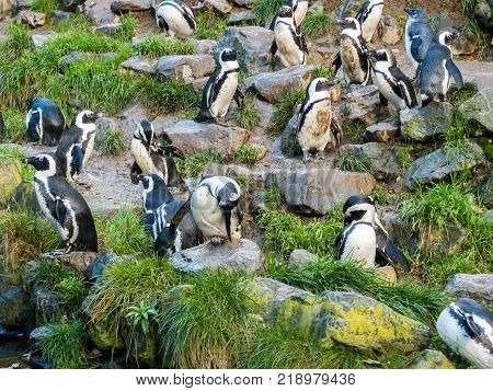 Colony of penguins on a rock in the zoo
