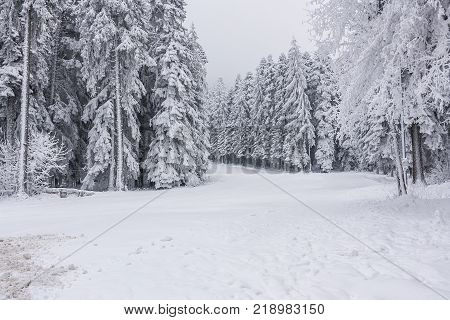 snowy landscape and lovely fluffy white snow. trees covered with snow. a white snowy fairy tale in the mountains. snowy road.