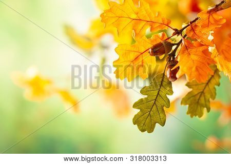 Autumn yellow leaves  of oak tree in autumn park. Fall background with leaves. Beautiful autumn landscape.