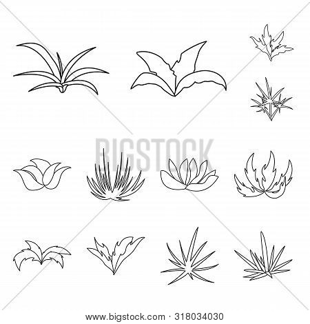 Isolated Object Of Hedge And Shrub Symbol. Set Of Hedge And Floral Stock Vector Illustration.
