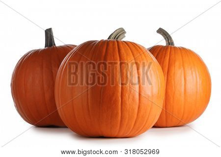 Three autumnal huge pumpkins isolated on white background