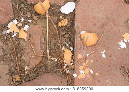 Eggshell on the stone floor close-up. chicken egg crushed. the feed for the chickens poster