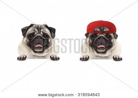 Frolic Smiling Pug Puppy Dog Wearing Red Cap Hat, With Paws On White Banner, Isolated