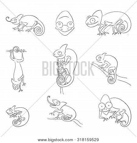 Chameleons In Different Poses Outline Illustrations Set