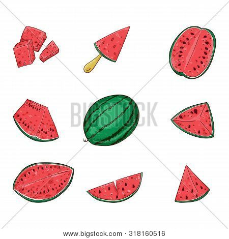 Watermelon Whole And Sliced Color Illustrations Set