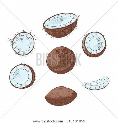 Coconut Whole And Cut In Halves Hand Drawn Color Illustrations Set