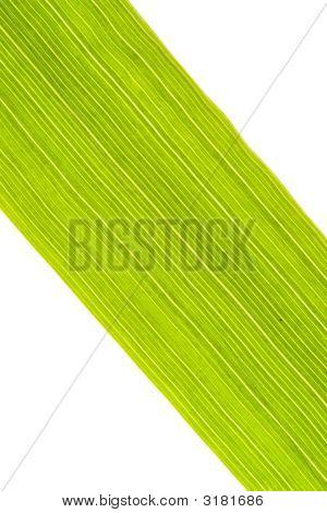 Grass Blade