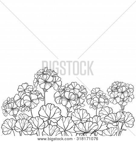 Vector Bouquet With Outline Geranium Or Cranesbills Flower Bunch And Ornate Leaf In Black Isolated O