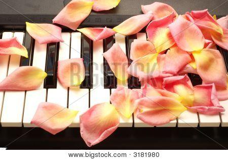 Petals On Piano