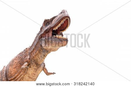 Tyrannosaurus Rex Isolated In White Background, Dinosaur Animal Concept