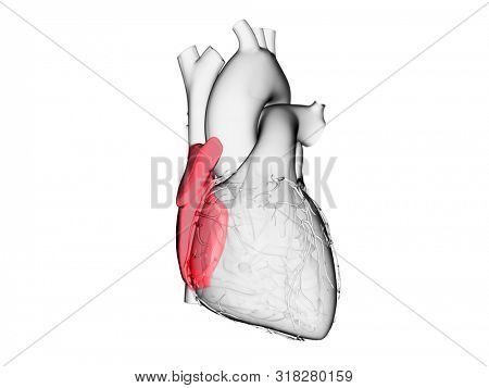 3d rendered medically accurate illustration of the right atrium