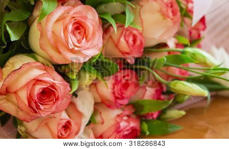 Beautiful Rose Flower In Garden. Rose Flower Background. Roses Flower Texture. Lovely Rose. Roses In