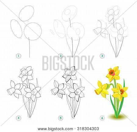 How To Draw Step By Step Beautiful Flower Narcissus, Bulbous Eurasian Plant. Educational Page For Ar