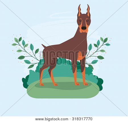 Cute Doberman Dog Pet In The Camp Vector Illustration Design