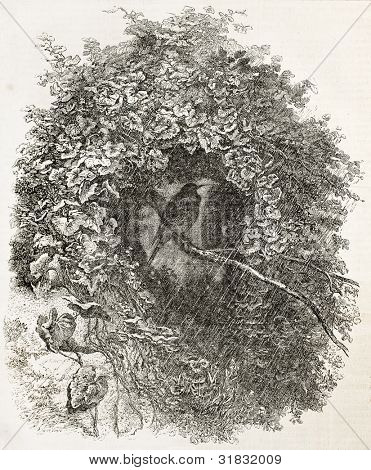 Bird taking shelter among leafy branches, old illustration. Created by Bodmer, published on L'Illustration, Journal Universel, Paris, 1863 poster