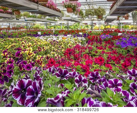 Greenhouse Scenery Including Various Flowers And Plants