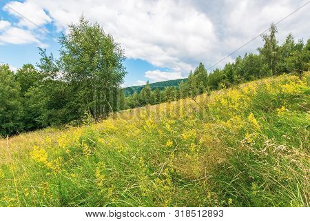 Grassy Glade In Mountain. Beautiful Nature Scenery On A Cloudy Day Among The Forest In Summer Time.
