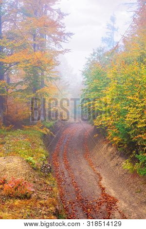 Beautiful Forest Scenery In Foggy Weather. Foliage On Trees In Amazing Fall Colors. Country Road Uph