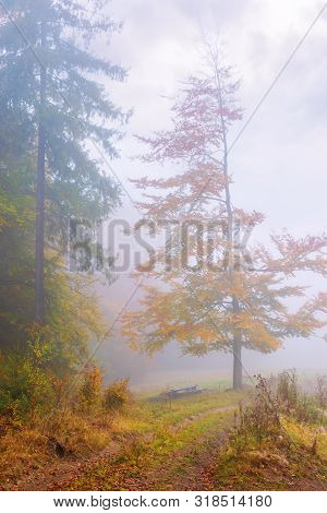 Beautiful Forest Scenery In Foggy Weather. Foliage On Trees In Amazing Fall Colors. Bench Near The P