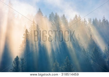 Sun Light Through Fog And Clouds Above The Forest. Spruce Trees On The Hill Viewed From Below. Fanta
